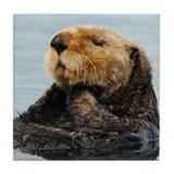 Alaskan Sea Otter Tile Coaster
