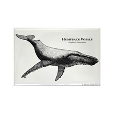 Humpback Whale Rectangle Magnet