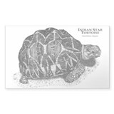 Indian Star-Tortoise Rectangle Decal