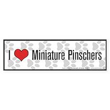 I (heart) Miniature Pinschers Bumper Car Sticker