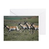 Antelope 2852-011 Greeting Cards (Pk of 10)
