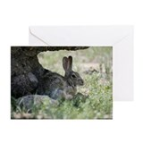 Rabbit 2851-112 Greeting Cards (Pk of 10)