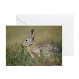 Rabbit 2850-018 Greeting Cards (Pk of 10)