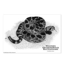 Western Diamondback Rattlesna Postcards (Package o