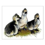 Goslings on Grass Small Poster