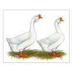 White African Geese Small Poster