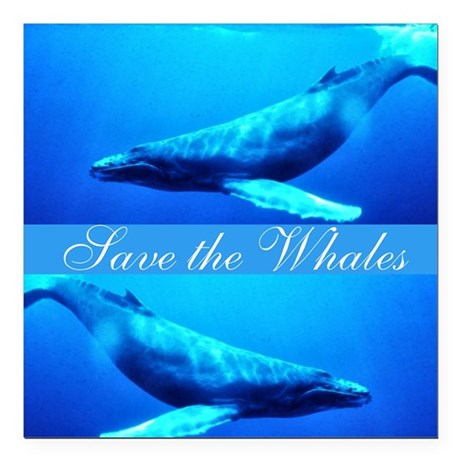 whales4.png Square Car Magnet 3&quot; x 3&quot;