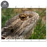 Beautiful Bearded Dragon on Grass Close up Puzzle