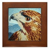Mya-Red-tail Hawk Framed Tile