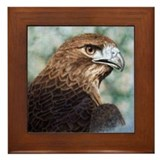 Red-tail hawk Framed Tile