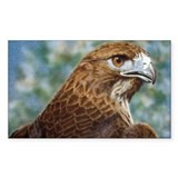 Red-tail Hawk Rectangle Decal