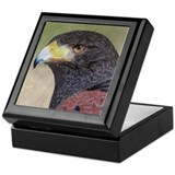 Harris' Hawk Keepsake Box