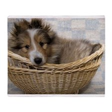 Sheltie Puppy Throw Blanket