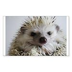 PocketProtectorStraighterMatted.jpg Business Card