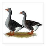 Tufted Toulouse Geese Square Car Magnet 3