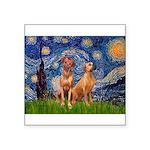 Starry / Rhodesian Ridgeback Square Sticker 3