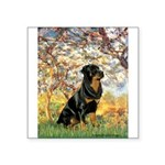 Spring / Rottweiler Square Sticker 3