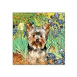 IRISES / Yorkie (17) Square Sticker 3