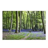 Bluebell Walk Postcards (Package of 8)
