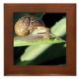 Slow Down Framed Tile