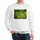 Cool Simply focused Sweatshirt