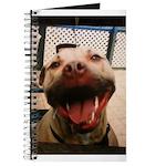DCK the RedNose american pitbull terrier Journal