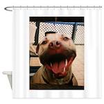 DCK the RedNose american pitbull terrier Shower Cu