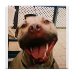 DCK the RedNose american pitbull terrier Tile Coas