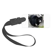 Sloth Bear Luggage Tag