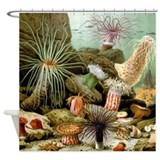 Giacomo Merculiano Sea Anemones Shower Curtain
