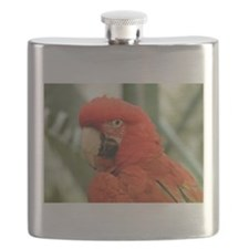 Red Macaw Parrot Flask