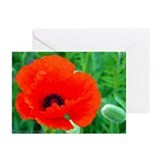 Greeting Cards (Pk of 10) - Oriental Poppy