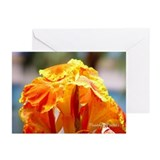 Greeting Cards (Pk of 10) Sacral Chakra - Lily
