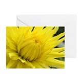 Greeting Cards (Pk of 10) Chakra cards, Dahlia