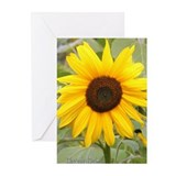Greeting Cards (Pk of 10) Chakra Cards, Sunflower