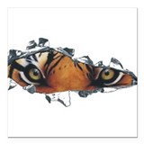 Tiger eyes in torn steel.png Square Car Magnet 3""