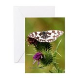 Greeting Card - Butterfly and Thistle