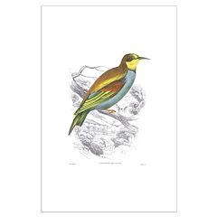 European Bee Eater Bird Large Poster