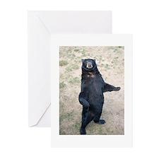 Black Bear Greeting Cards (Pk of 20)