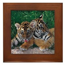 Two Baby Tigers Framed Tile