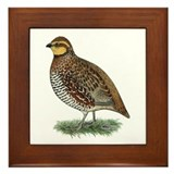 Bobwhite Quail Hen Framed Tile