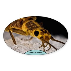 Isoperla Stonefly Oval Sticker