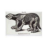 Megatherium Rectangle Magnet