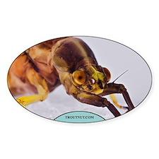 Closeup Hexagenia Mayfly Oval Decal