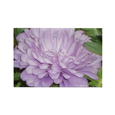 Lavender Flower Rectangle Magnet (100 pack)