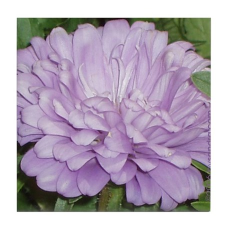 Lavender Flower Tile Coaster