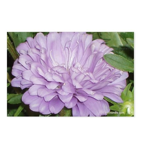 Lavender Flower Postcards (Package of 8)