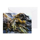Kelp by the sea Greeting Card