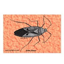 Cotton Stainer Postcards (Package of 8)