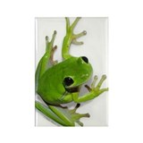 Tree Frog - Rectangle Magnet (10 pack)